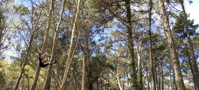 Forestal Park -Acanta